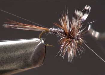 Fly Tying Whiting 100/'s Saddle Hackle Cree sz#14